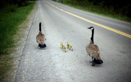 Quack Highway