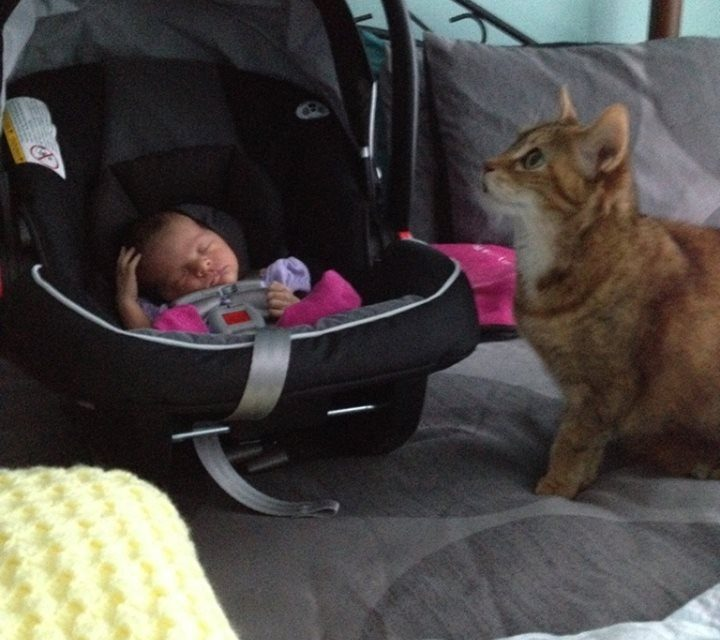 Furbaby and Baby Introduction
