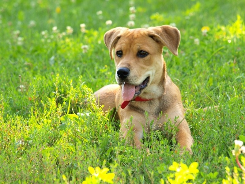 10 Tips For New Dog Owners