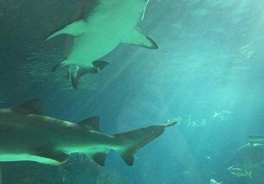To Conserve, Educate and Inspire at Ripley's Aquarium of Canada