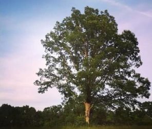 Blogger of The Week: Mindful Tree Mama!