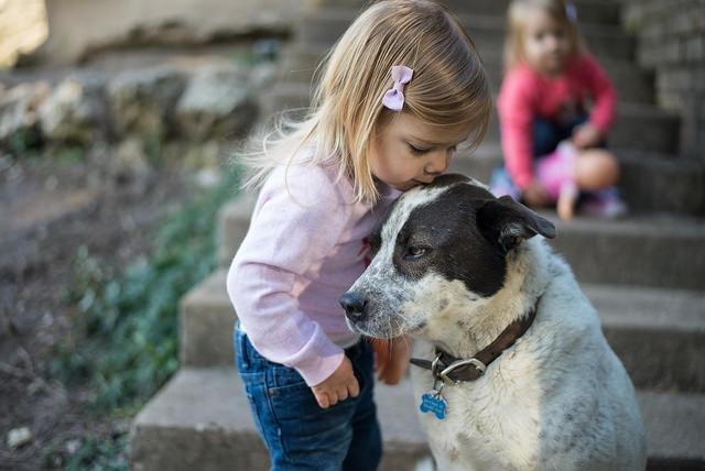 How Pets Train Families