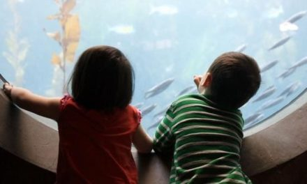 How to Introduce Toddlers to the Variety of Life in Earth's Oceans