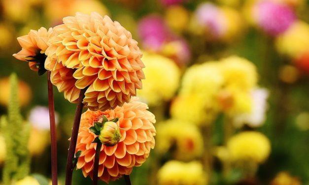 3 Ultimate Gardening Tips For Your Children