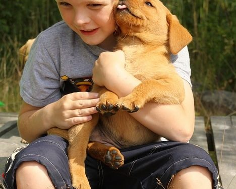 Are Children And Dogs A Good Mix?