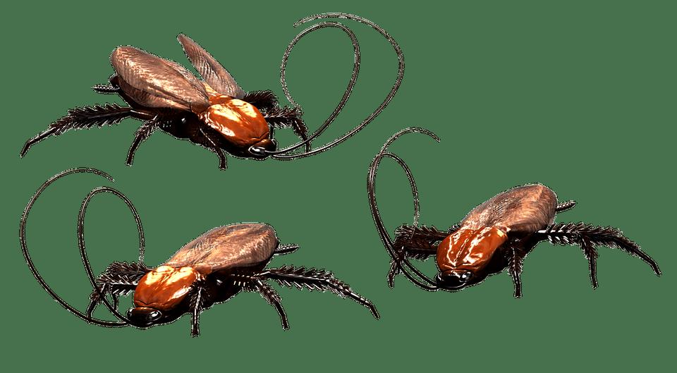 How to Kill Fleas with a Flea Bomb