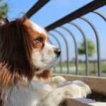 Dog-Proofing Your Kids