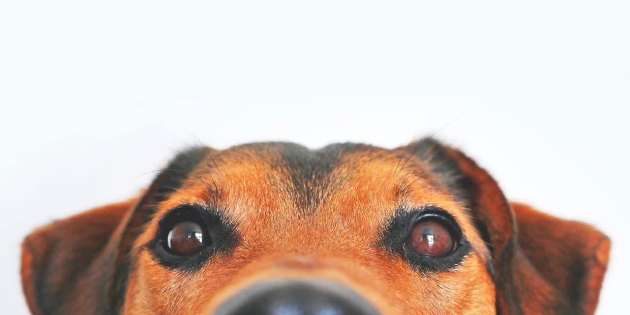 Dog Bite Injury: How to avoid and treat dog bites